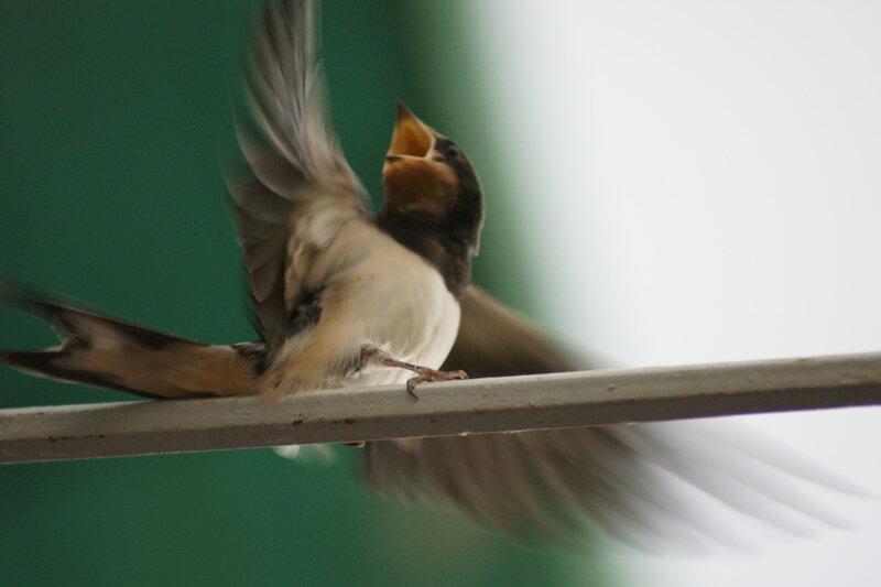 Птиц разволновался!