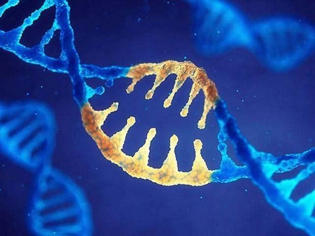 способ омолаживания клеток человека