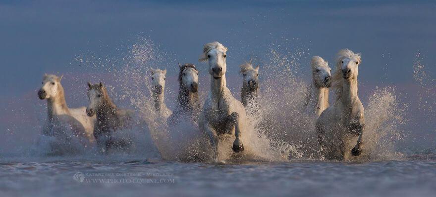 fotografij-loshadej-skachushhih-po-volnam-okeana-foto-2.jpg