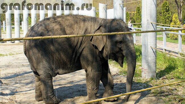 знакомство с животными в цирке