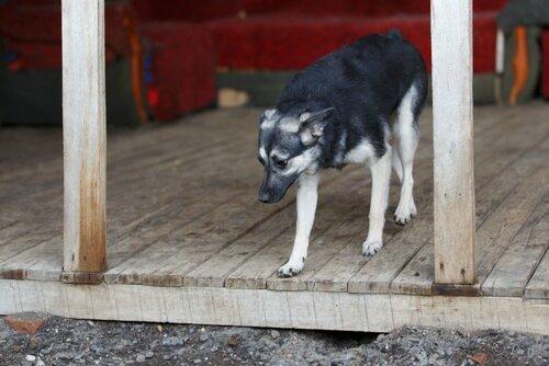 Бэмби собака из приюта догпорт фото