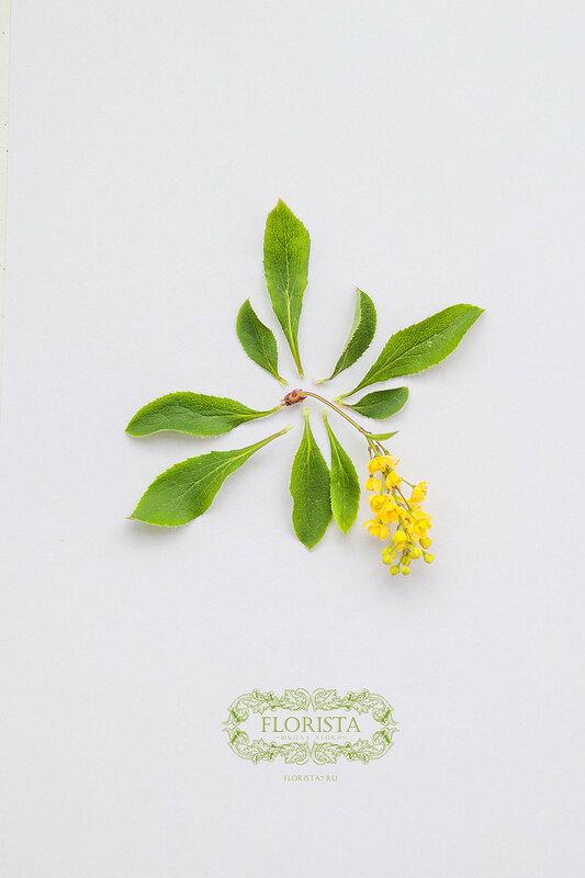 Цветы в разборе