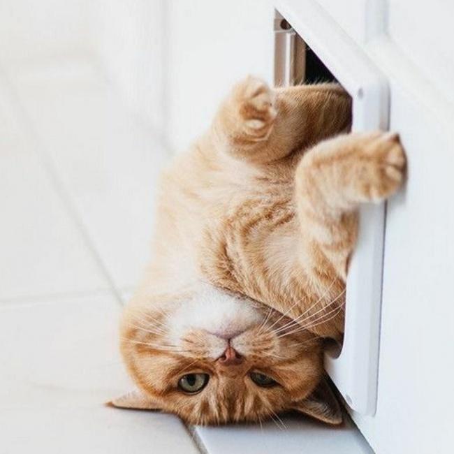 © peculiarthoughtsofayoungwoman.files.wordpress.com  Все, что делает кот, всегда правильно, ну