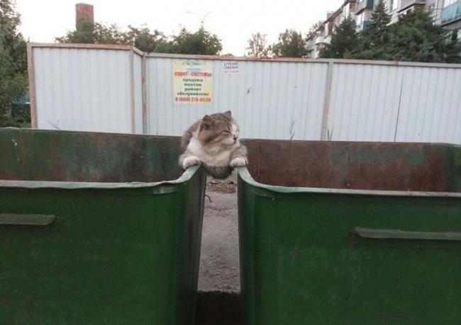 © twitter.com  Ниодин Ван Дамм ирядом невалялся.  Наконец, коты уверены всвоей бесподоб