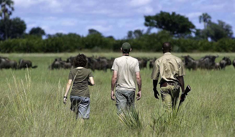 23. Это уникальная возможность увидеть львов, буйволов, слонов и жирафов на воле, а не за железными
