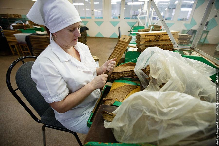 Далее сигары укладывают в дубовые пресс-формы. В них сглаживаются все неровности табачных лис
