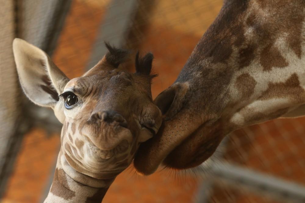 Забавные Животные (31 фото)