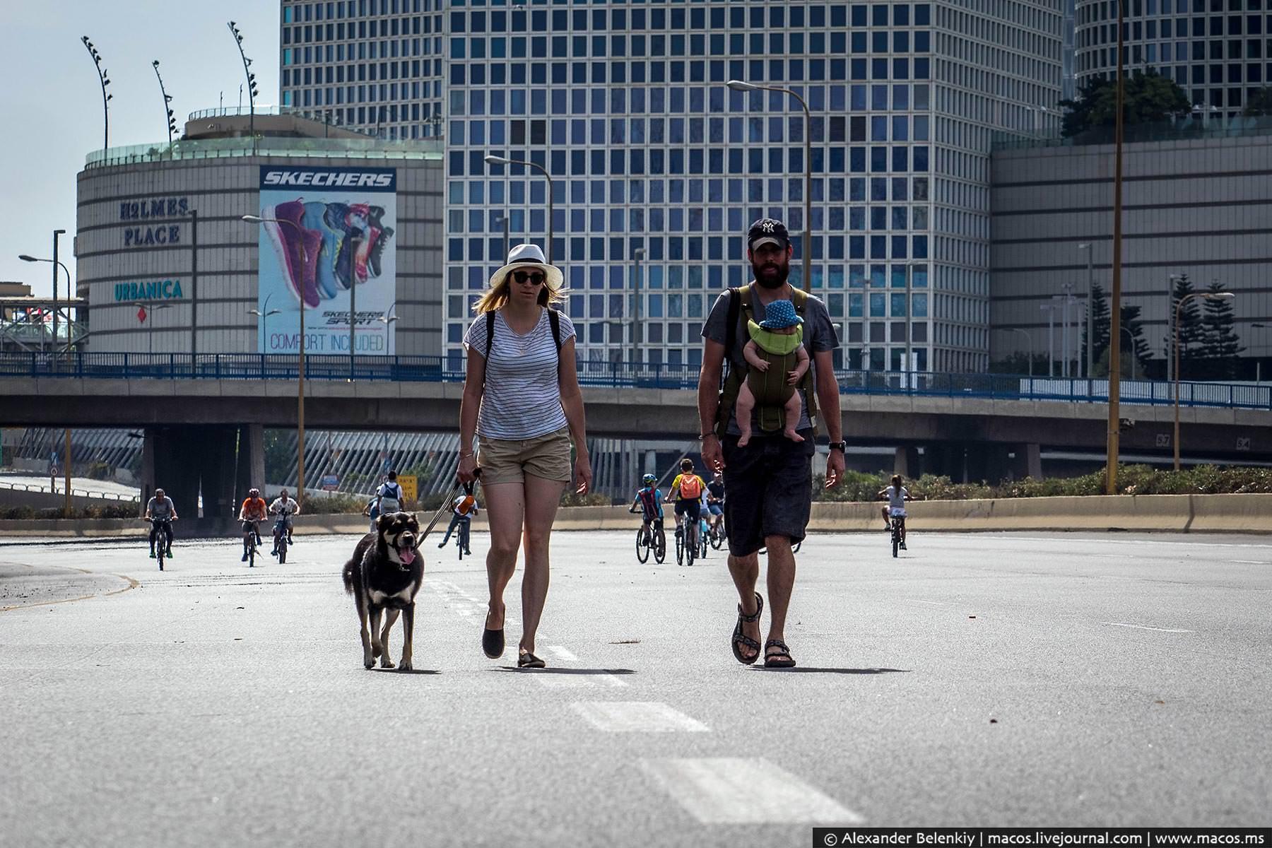 Люди выходят погулять с собаками и детьми.