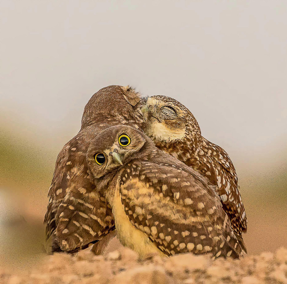 5. Гну идет на водопой. (Фото Paulette Struckman | Comedy Wildlife Photography Awards):