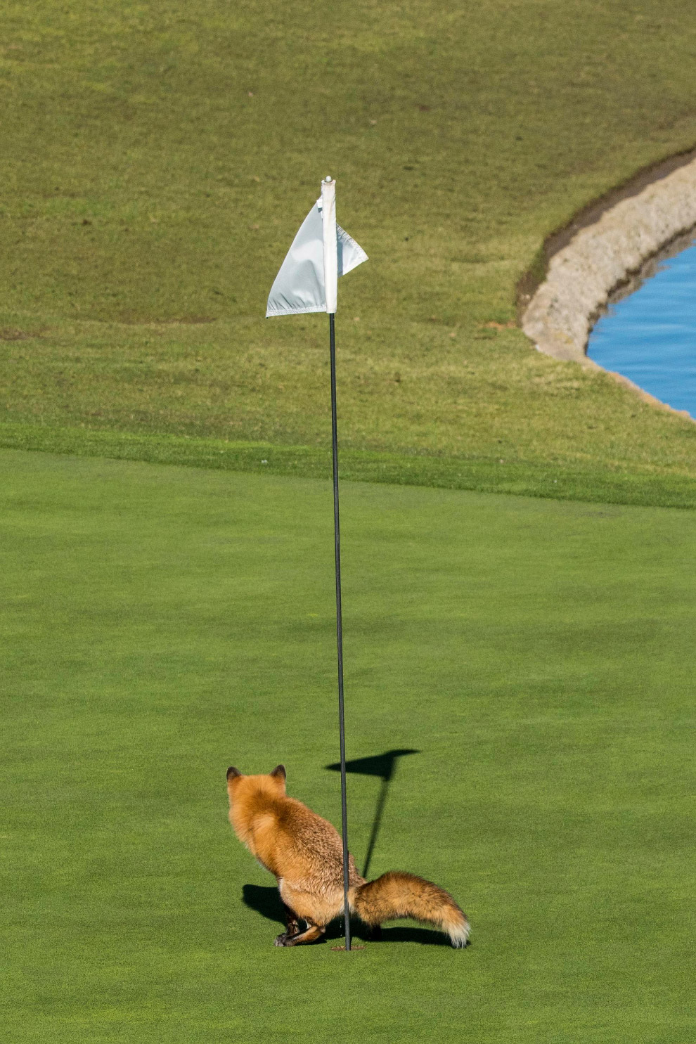 9. Смешная шутка. Гиеновидные собаки в Африке. (Фото Tina Stehr | Comedy Wildlife Photography Awards