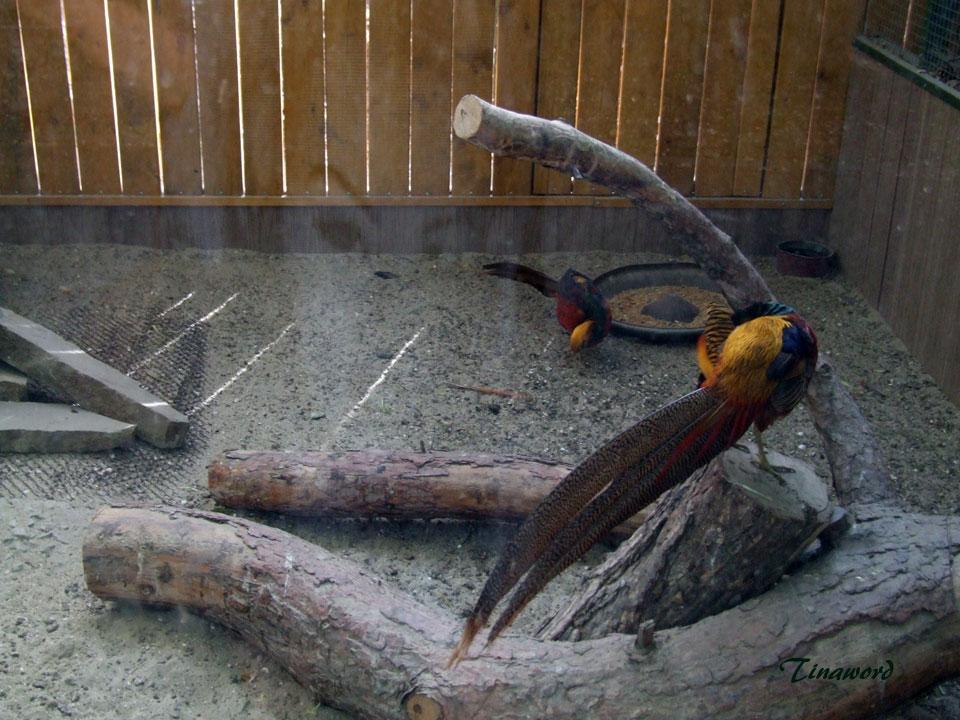 зоопарк-35.jpg