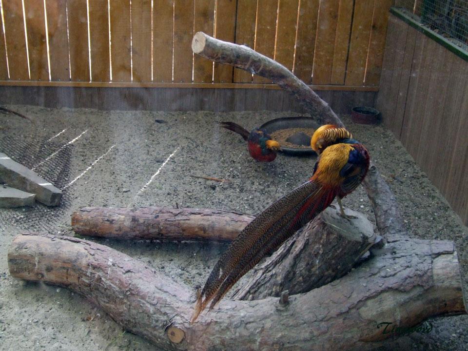 зоопарк-36.jpg