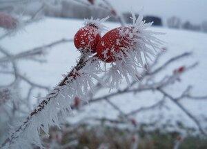 Зимние колючести