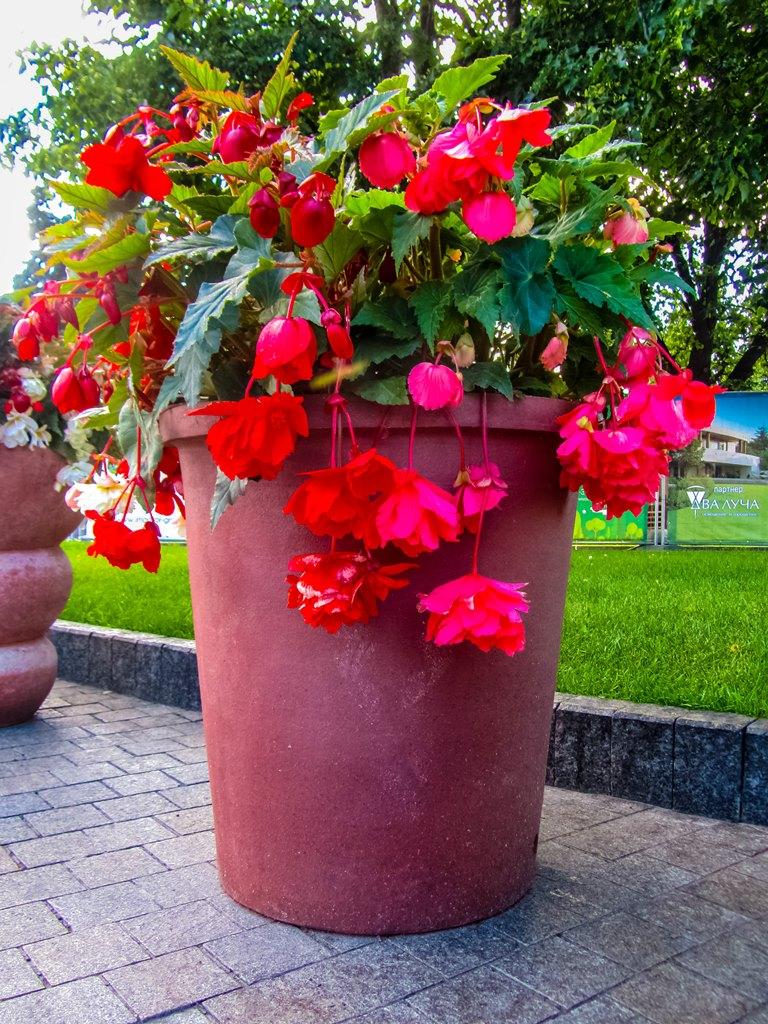 irina-fortuna-moscow-flowers 07.jpg