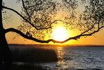 Солнце на ветвях качалось