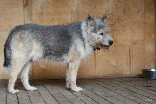 Мухомор собака из приюта догпорт