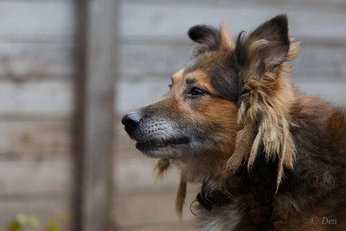 Рыжий Фокс собака из приюта догпорт фото