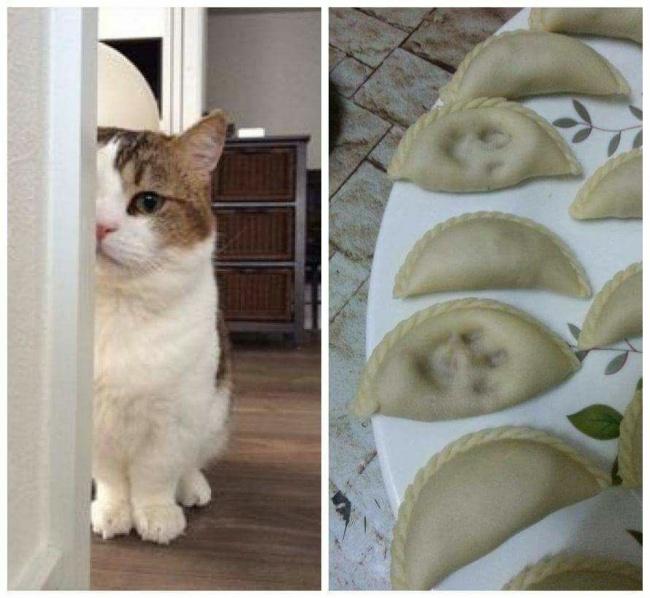 20потрясающих котов, которые сломали систему (22 фото)