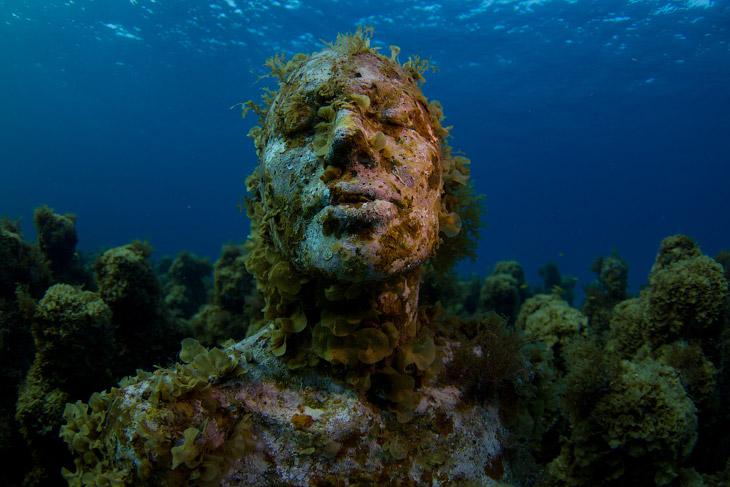 Небольшая справка:  коралловые рифы занимают примерно 0,1 процента всего миро