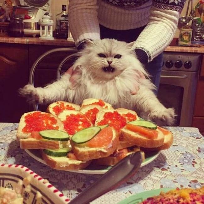 © SpringMelody / pikabu.ru      Когда лучший друг назвал тебя хорошим мальчиком