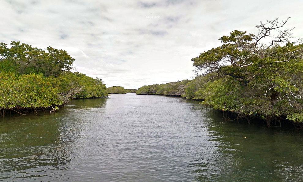 Конолофы (лат. Conolophus) — род игуан, обитающий исключительно на Галапагосских островах. Близкие р