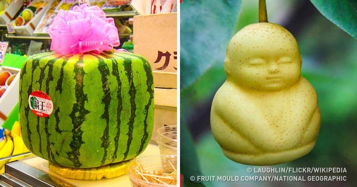 Редкие фрукты, которые стоят возмутительно дорого (11 фото)