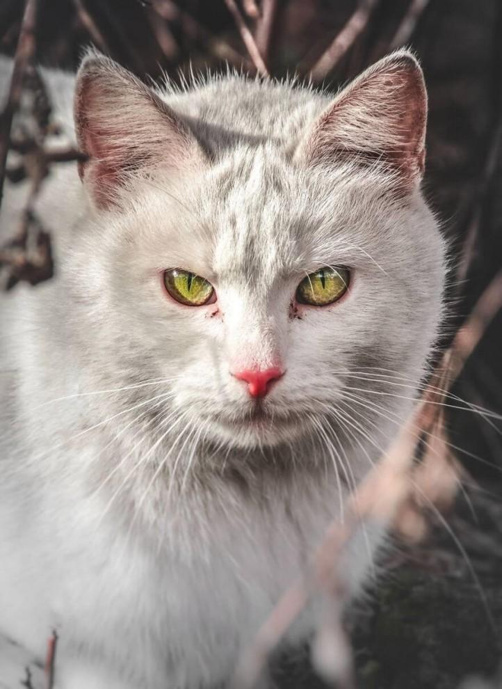 Бездомные кошки Вильнюса: иная красота (10 фото)