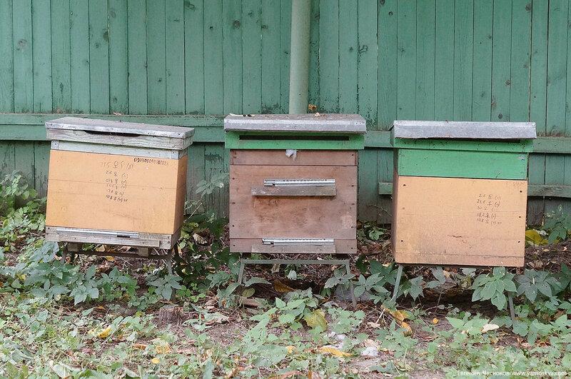 Кузьминки парк. экологи. Пасека. 04.10.17.02..jpg