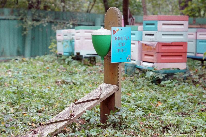 Кузьминки парк. экологи. Пасека. 04.10.17.06..jpg