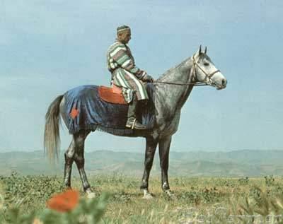 Лошадь-породы-карабаир.jpg
