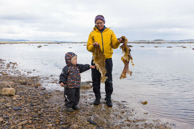 нашли на берегу баренцева моря большие водоросли