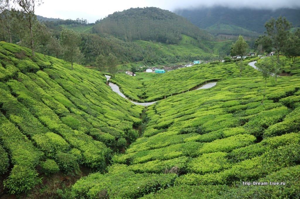 Муннар штат Керала, южная Индия
