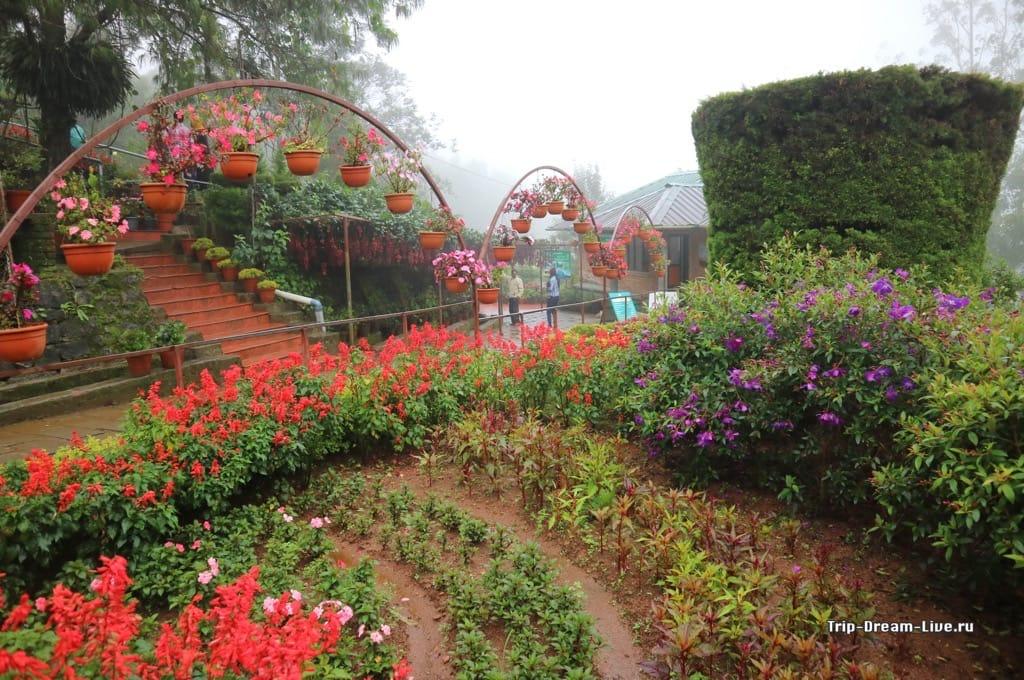 Forest Flower Garden