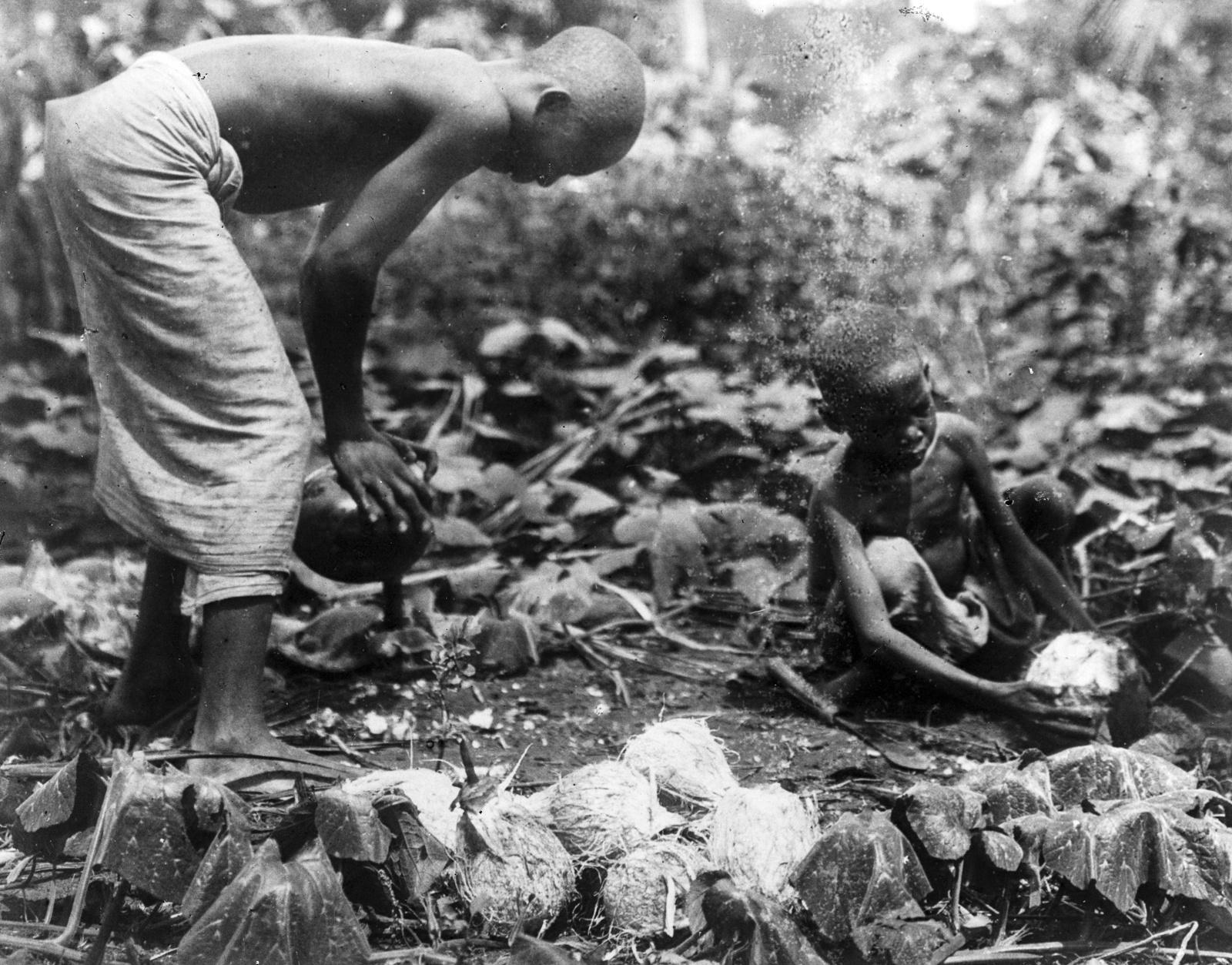 66. Раскалывание кокосовых орехов