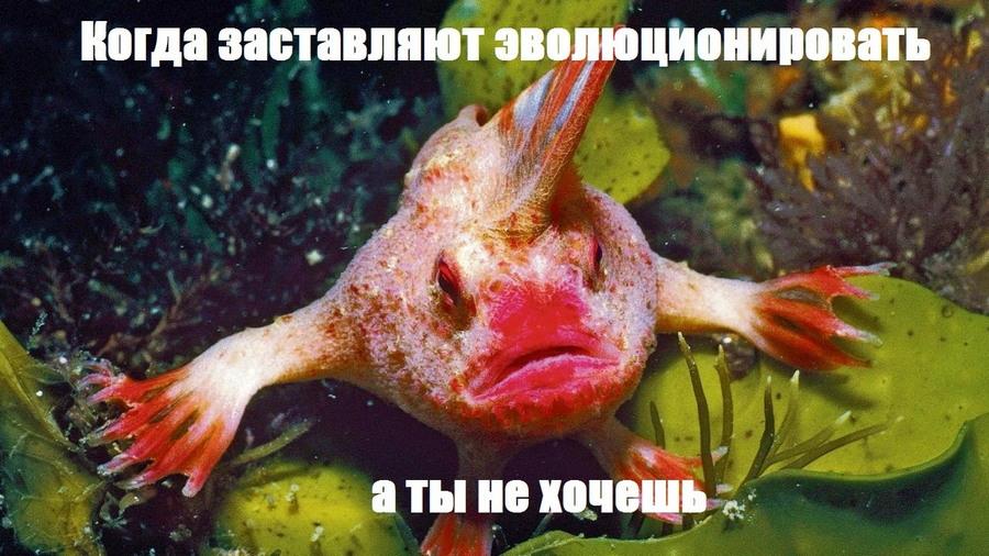 Подборка интересных и веселых картинок 28.01.18