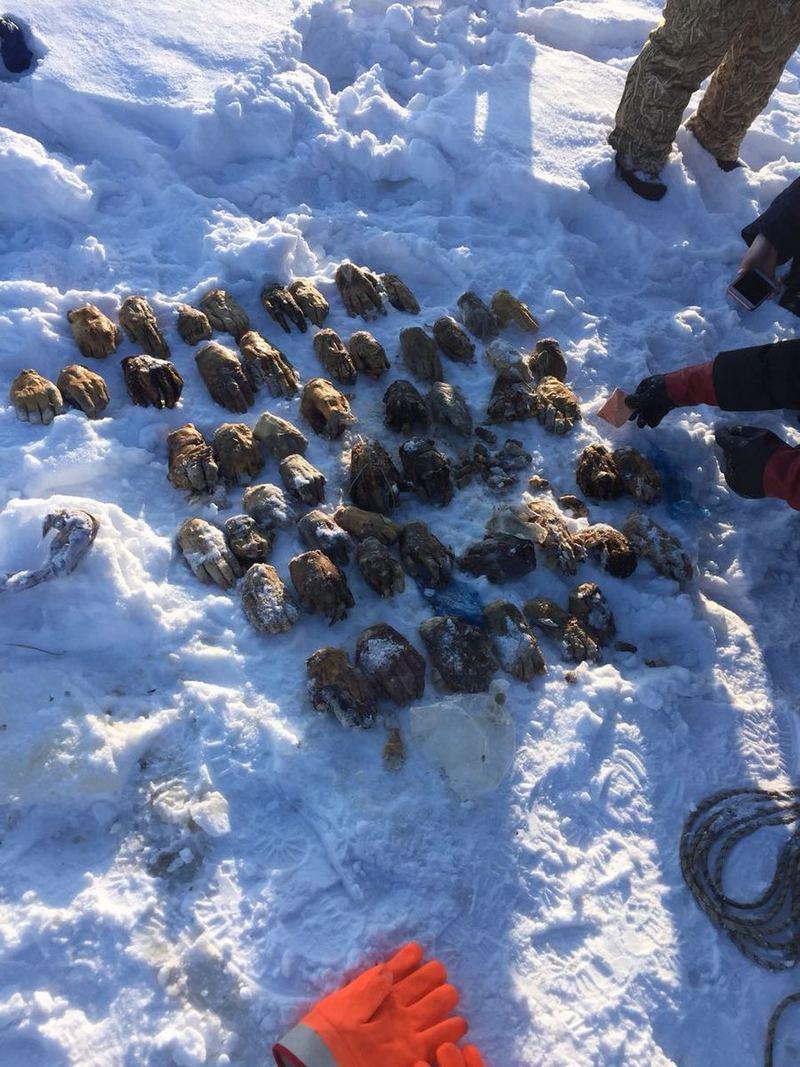 26 пар человеческих кистей нашли в пригороде Хабаровска
