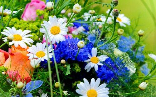 flowers-wallpapers-2560x1600-0003.jpg