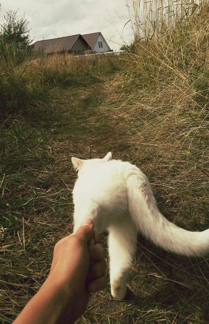 Кот тоже зовет проследовать за ним.