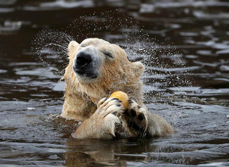 Животные в фотографиях (28 фото)