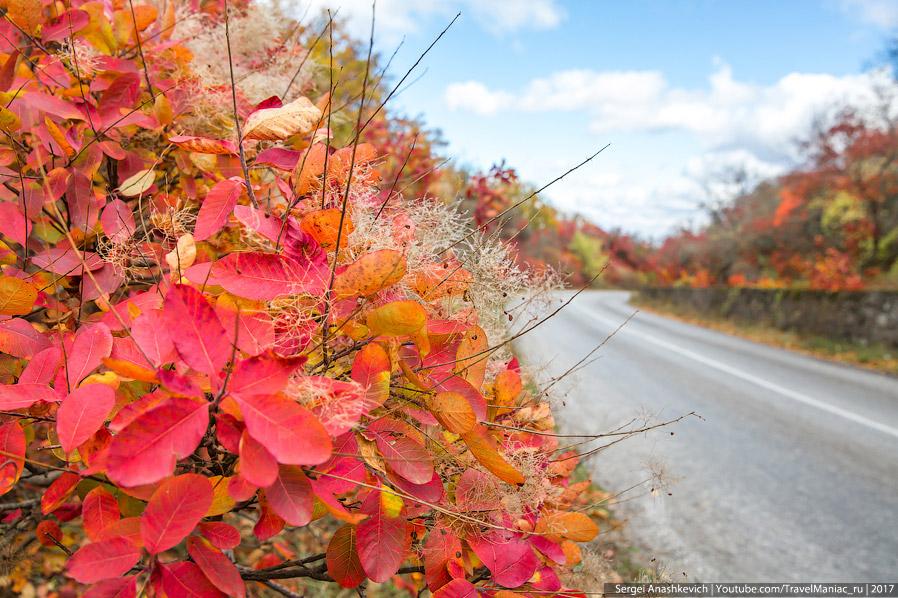 4. Красный отлично сочетается с любым цветом — зеленью мха, желтизной листьев, голубым небом и серым
