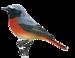 Bird vector Graphics