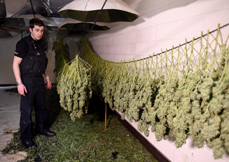 Заброшенный ядерный бункер превратили в фабрику по выращиванию марихуаны