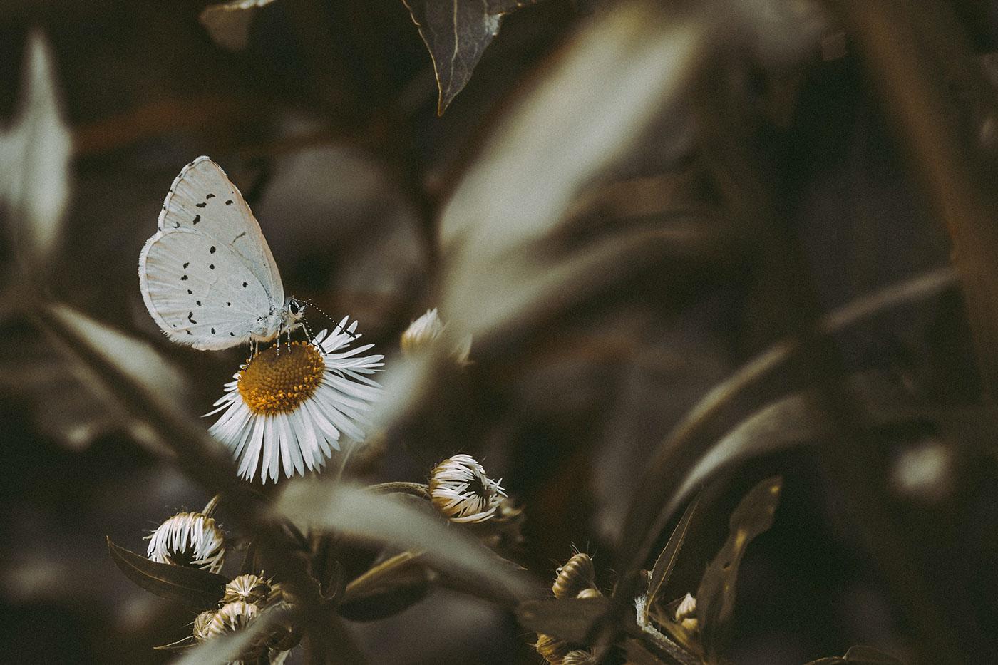 Лето и бабочки / фото Alexey Chmykhalov