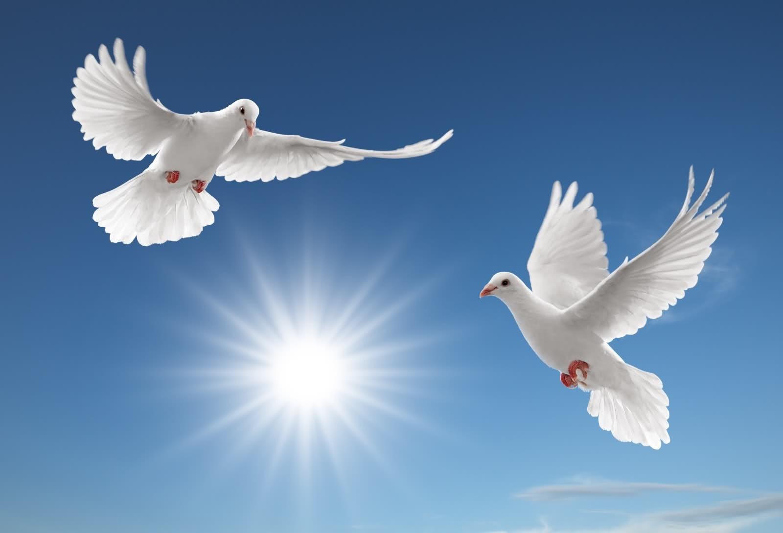 21 сентября — Международный день мира. Голубь. Мира-вам