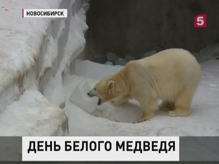 День полярного медведя. Красавец