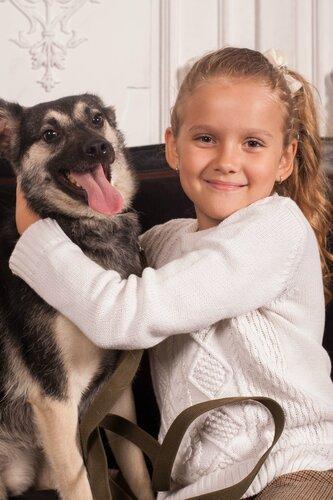 Бэмби собака из приюта догпорта
