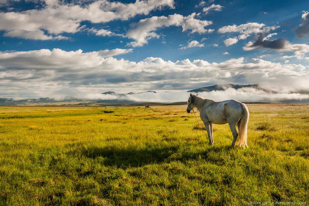 13. Туман ушел, но горы и кони остались)