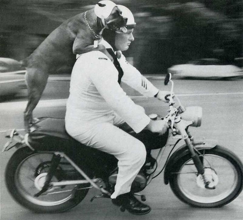 15. Кэти соблюдает закон о наличии шлема на голове во время езды на мотоцикле с Франклином Дрисколло
