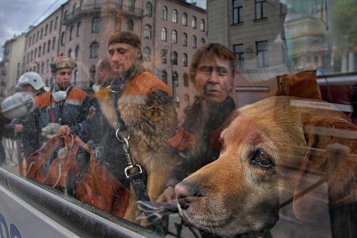Фотографии Александра Петросяна   Лицо в толпе: