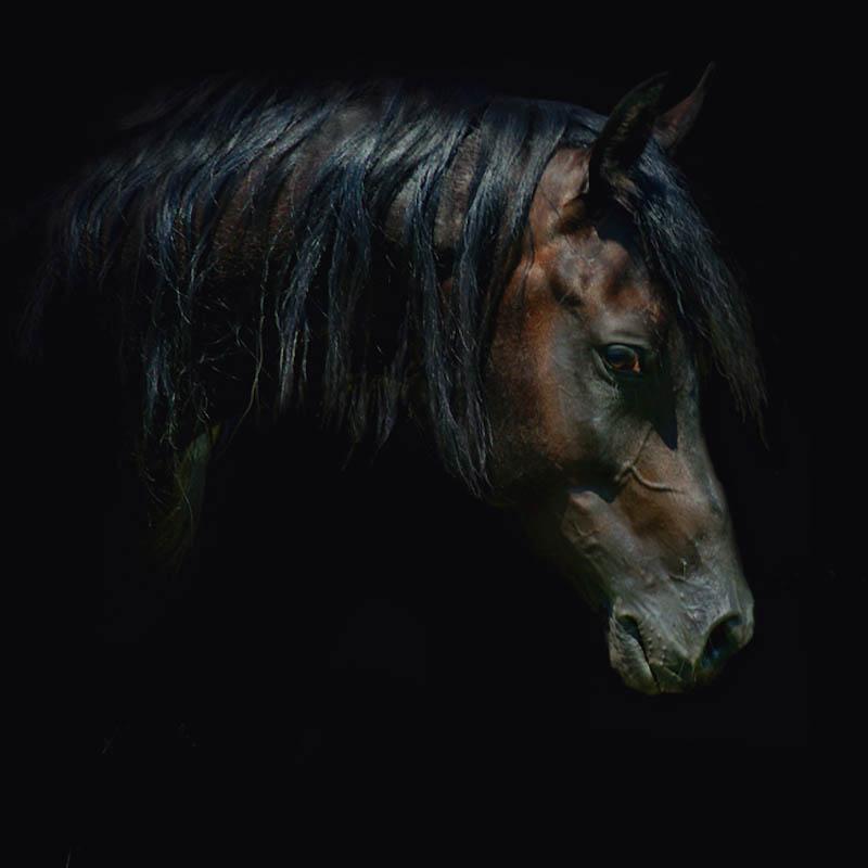 20. Лошадей с четкой формой головы и высоко посаженными хвостами изображали в искусстве Древнего Еги